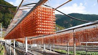 日本一の柿産地、串柿づくりが最盛期 山里がオレンジに 和歌山・かつらぎ町