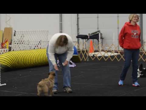 Dog owners prepare for American Kennel Club show