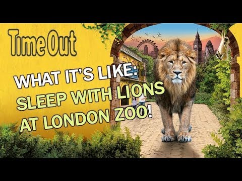 Now you can sleep with the lions at Gir Lion Lodge at London Zoo | First Look | Time Out London