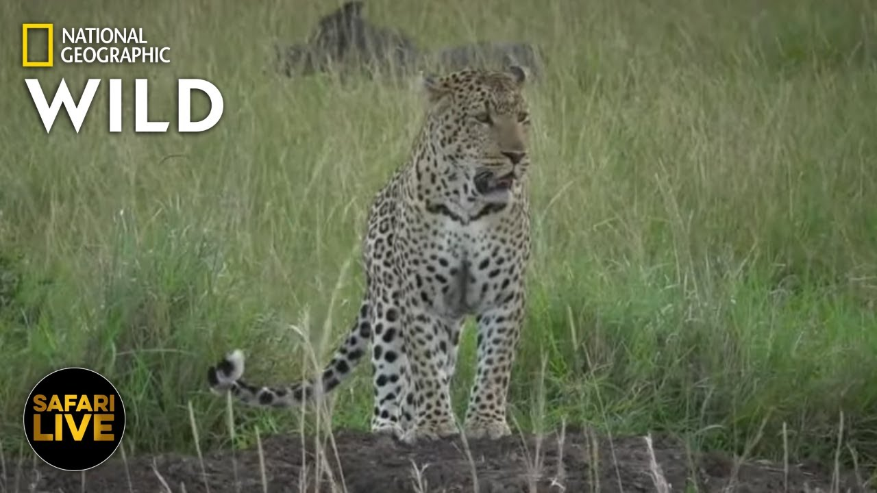 Safari Live - Day 357 | Nat Geo Wild