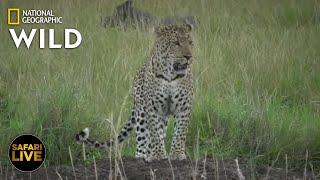 Safari Live - Day 357 Nat Geo Wild