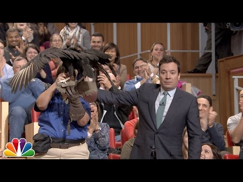 Chris Packham Sends a Black Vulture Flying to Jimmy