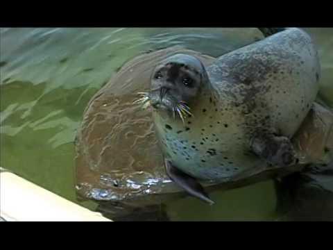 olympic NP, oregon coast aquarium 2004 2