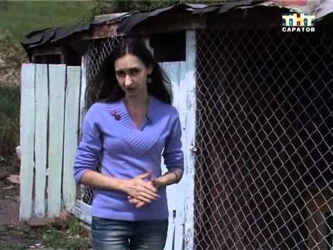 Школьница из Саратова организовала приют для животных