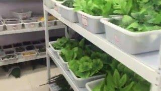 видео Расходные материалы, инструменты и оборудование для флористов