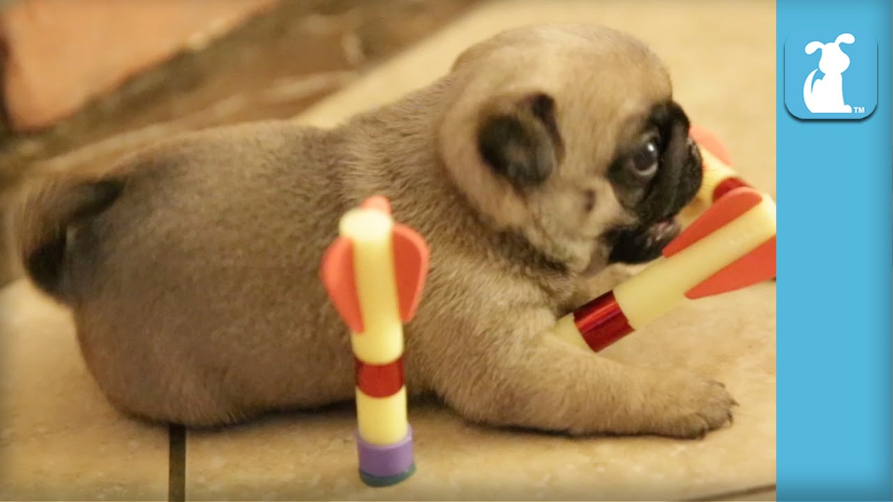 Play Puppy Love