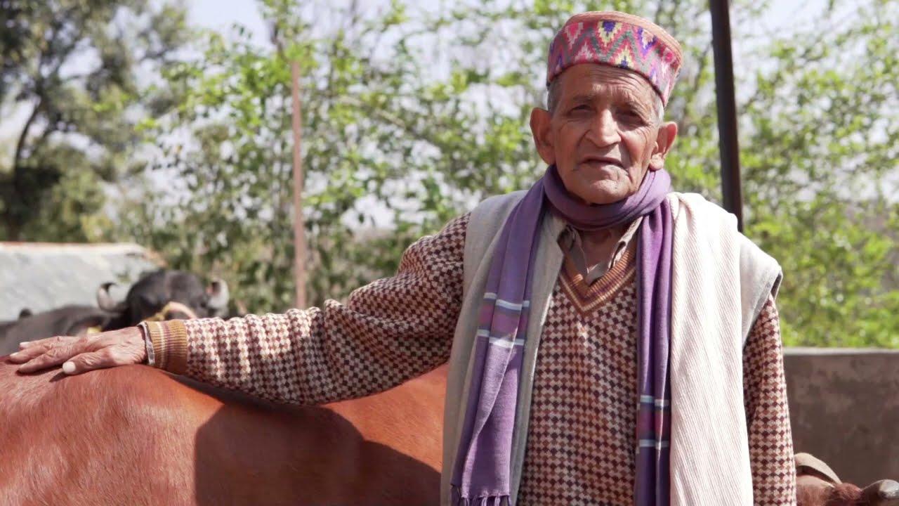 प्राकृतिक खेती में किसानो के अनुभव |आत्मा हमीरपुर,बमसन #NaturalFarming #SPNF #ZBNF #GreenAgriculture