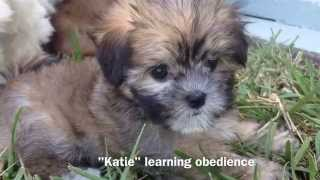 Michelines Pups Training