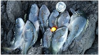 [IFiA] Two Harbor Fishing Trip_10182014