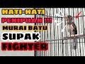 Gambar cover MURAI BATU SUPAK ??? | KITA HARUS LEBIH CERDAS DARI PENJUAL !!