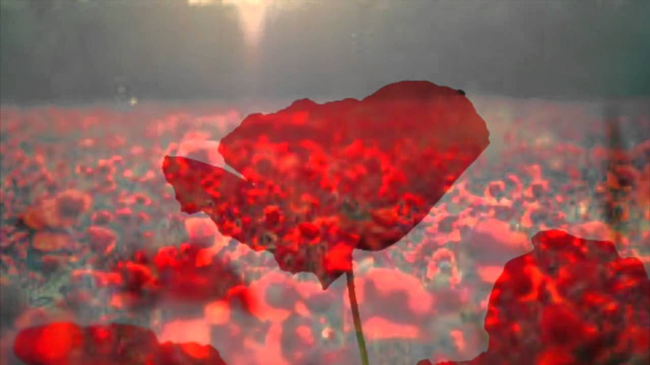 Remembrance Day Tribute recommendations