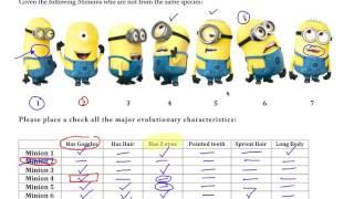 Minyonlar ile AP Biyoloji - Cladogram Uygulama