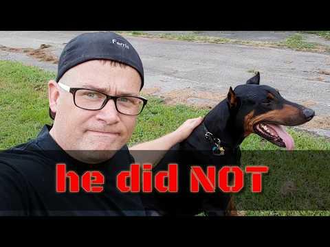 How FAST can a Doberman Run part 2