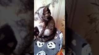 Мая кошка  Люся и её новый домик