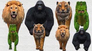 Wild Animals Kids Matching Game For Children | Tiger Gorilla Lion Colours Finger Family Video