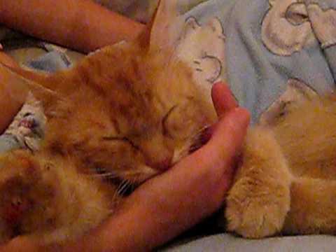 Кот сосет руку