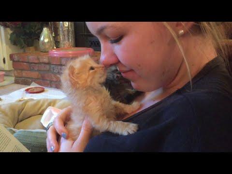 Cute Kitten Hugging Owner