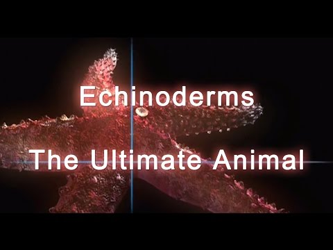 Shape Of Life: Echinoderms - The Ultimate Animal