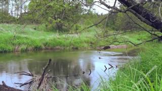 Река. Природа. Травы. Пение птиц. Музыка. Релакс. Медитация. Звуки природы. Место силы