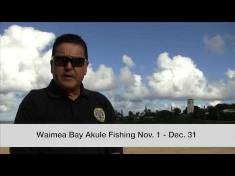 DLNR Announces Akule Fishing At Waimea Bay, Oahu - Fishing Open Nov. 1 -- Dec. 31