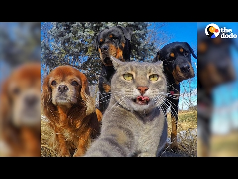 Cat Is The King Of Selfies | The Dodo