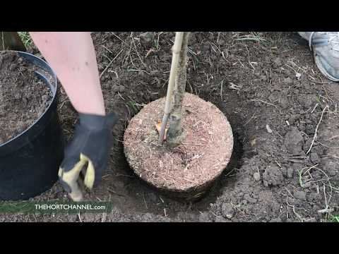 Organic Gardening: Planting A Fruit Tree | Growing Fruit