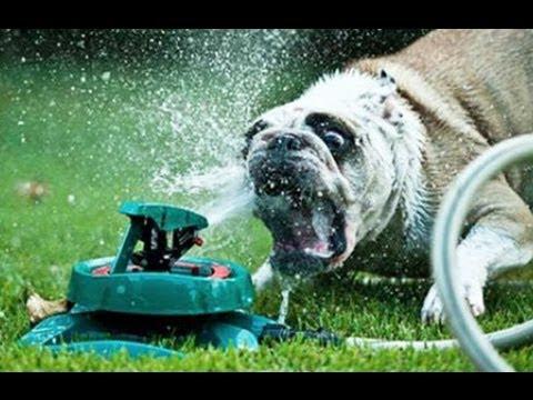 Funny Dogs vs Sprinklers Compilation 2013