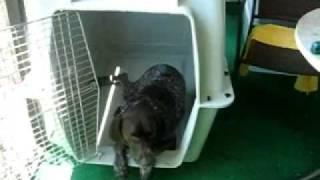 видео Клетка-перевозка для собак Ferplast Atlas Vision Extra Large
