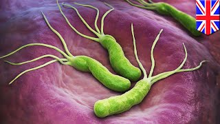 Researchers discover bacteria's drug defense mechanism - TomoNews