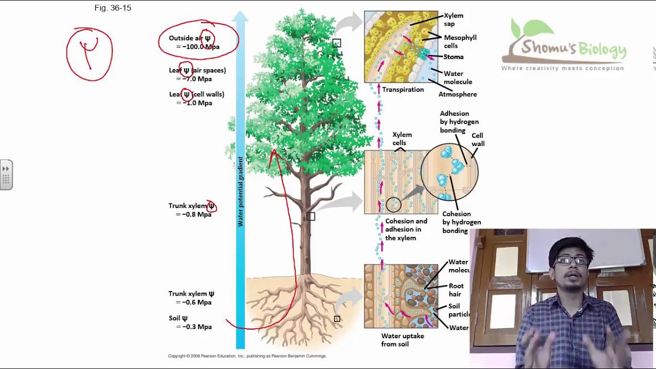 Plant physiology lecture plant physiology class 11 and class 12 plant physiology lecture plant physiology class 11 and class 12 ncert biology lecture videos youtube ccuart Image collections