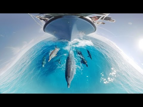 GoPro VR: Swimming with Wild Dolphins in the Ocean
