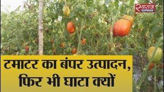 घाटे का सौदा बन रही टमाटर की खेती   No profit in tomato farming