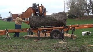 Walnut Tree Cut Into Lumber
