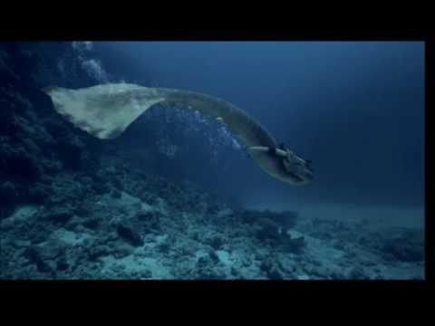 REAL MERMAID CAPTURED SWIMMING IN PACIFIC OCEAN!!