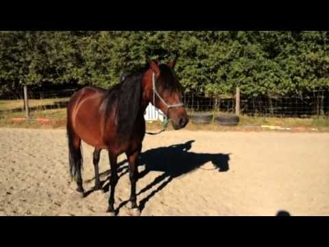 Straighten Strengthen and Supple your horse in hand