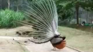 kambalakonda