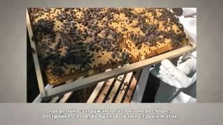 урок 3 Пчеловодство Тренер Дуйшеналиев Ж.Б.