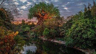 #DisneyParksLIVE: Sunrise at Disney's Animal Kingdom | Walt Disney World