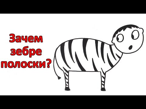 Вопрос: Зачем зебрам черно-белые полоски?