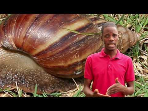 Snail Farming in Nigeria & Secrets of making money