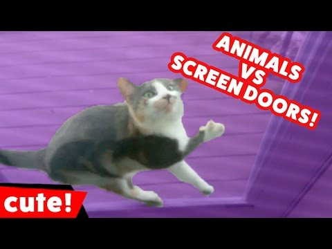 Funniest Pets Vs Screen Doors Home Videos of 2016 Compilation | Kyoot Animals