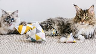 Unboxing Cat Toys from Minoumi