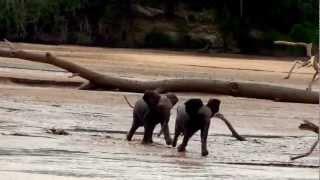 ママ、見つけた!はぐれたお母さんに駆け寄る子ゾウたち