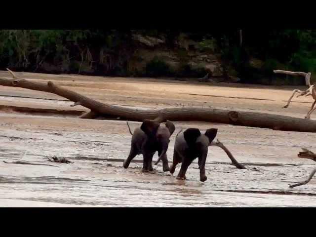 Lost Elephant Babies