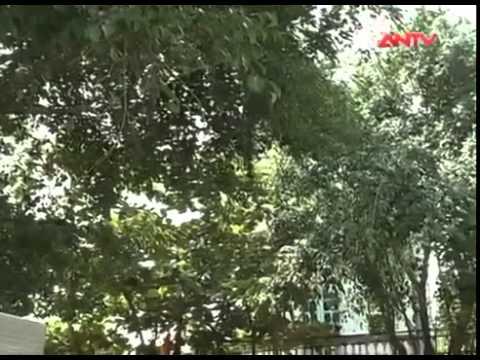 tranh chấp đất đai Quang Yên- Sông Lô- Vĩnh Phúc