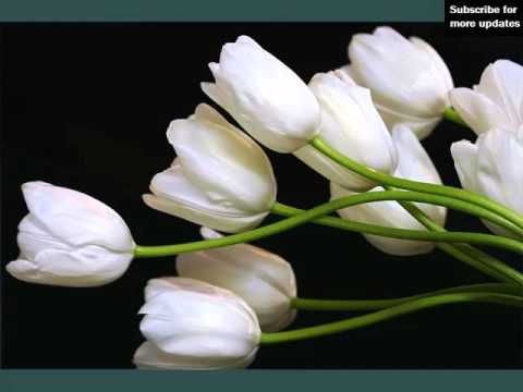 White tulips beautiful white folwers images phula youtube white tulips beautiful white folwers images phula mightylinksfo