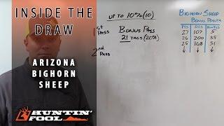 Arizona Draw Explained: Part 1, Bighorn Sheep