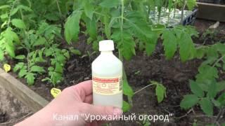 видео Удобрение для рассады томатов. Виды и типы удобрений
