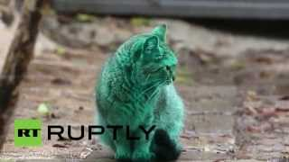 На улицах Варны появилась загадочная зеленая кошка