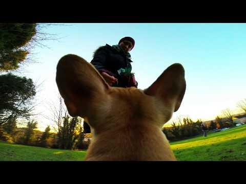French Bulldog Millie-Cam 2013 filmed using GoPro